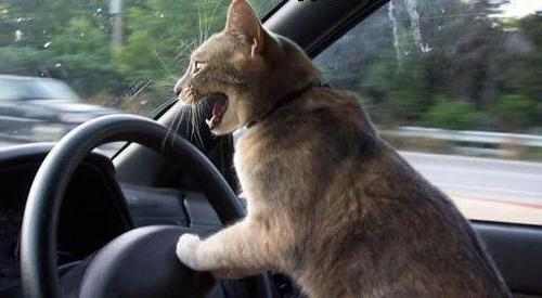 cats_drive-1